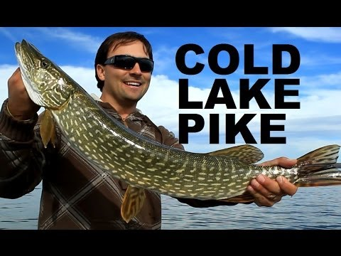 Cold Lake Fall Northern Pike Fishing