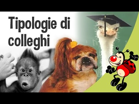 Tipologie di colleghi   Animali buffi   Auguri.it   YouTube