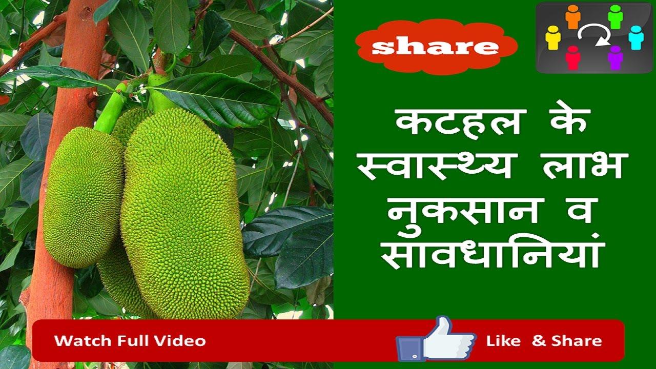 kathal ke fayde aur nuksan( Health Benefits of Jackfruit in hindi)