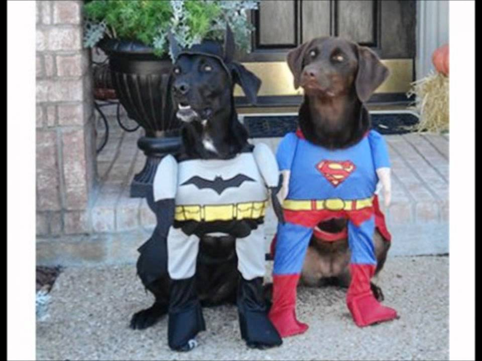 Best Dog Halloween Costumes - YouTube