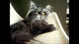 Funny cat look caused by a rare genetic disorder