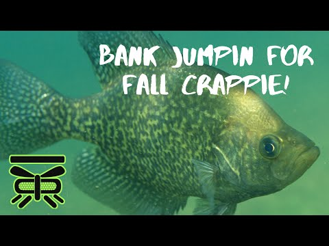 Fall Crappie Fishing From The Bank!