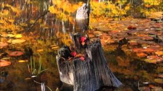 シューベルト: 歌曲集「冬の旅」:菩提樹 D.911-5[ナクソス・クラシック・キュレーション #切ない]
