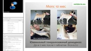«Демодекоз собак 2015: что новенького?»(, 2015-06-04T08:22:47.000Z)