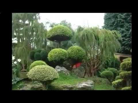 Подбор растений для укрепления склонов Ландшафтный дизайн