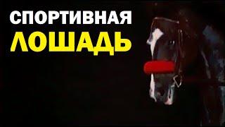 Галилео. Спортивная лошадь