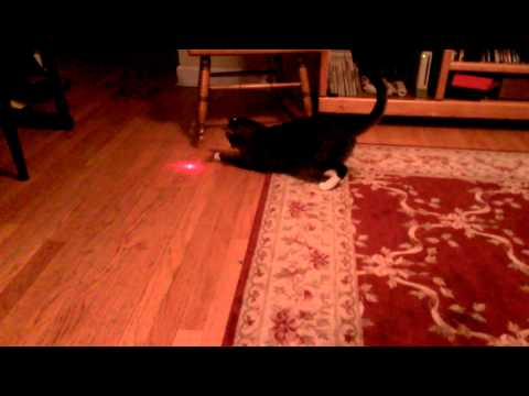 Thumbnail for Cat Video Cat with laser pointer on head