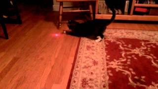 飼い主は楽ちん?猫がずっと遊べるレーザーポインターの秘密