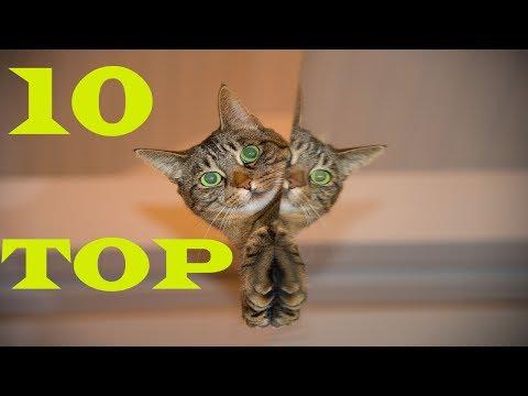 Top Ten 10 Cat Breeds || Funny Cats ||
