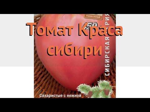 Томат обыкновенный Краса сибири (krasa sibiri) 🌿 обзор: как сажать, семена томата Краса сибири
