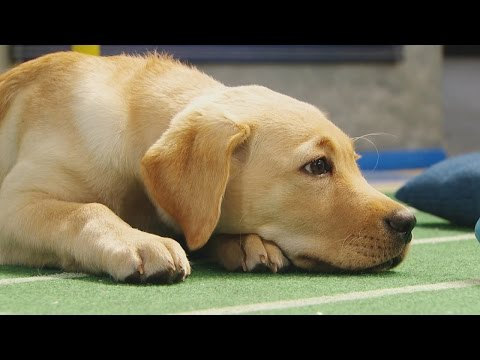 It's a Ruff Game | Puppy Bowl