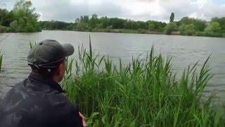 Веселая ловля толстолобика(Ловля толстолоба увлекательное занятие. К сожалению по холодной воде нормальные экземпляры толстолобиков..., 2016-05-18T11:42:19.000Z)