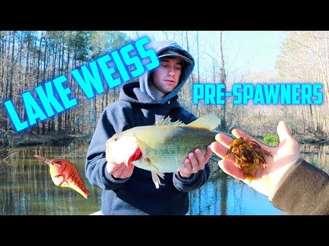 Fishing For BIG PRE-SPAWNERS On Lake WEISS!!!