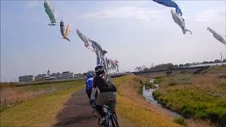桐生吾妻公園と粕川沿いの鯉のぼり190421
