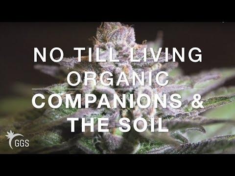 No-Till Living Organic: Companions, Arthropods & Feeding the Soil.