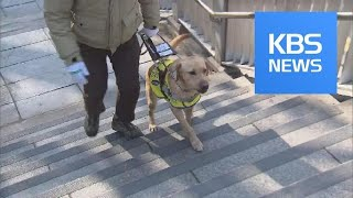 Guide Dog Regulations / KBS뉴스(News)