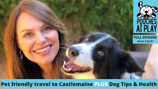 Pet friendly travel to Castlemaine Victoria, Dog training tips, dog health advice | Full Ep | S5E01