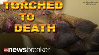 DOG TORCHED: Woman Faces Felony Charges She Burned Her Dog to Death