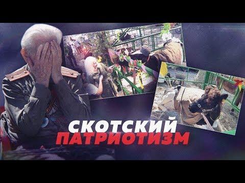 КОРОВЫ В ПИЛОТКАХ И ШИНЕЛЯХ. СКАНДАЛ В БРЯНСКЕ // Алексей Казаков