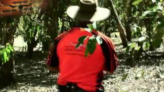 Bulls Boars n Barra Trailer Teaser - Hunting