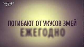 видео Эко-квест
