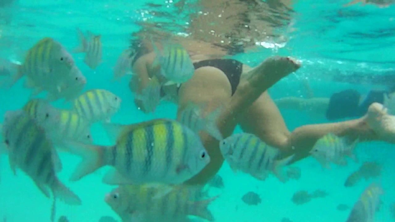 Best Snorkeling In St Thomas At I Beach You