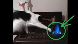 Funny Animal Videos 2019