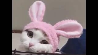 Котёнок-зайка