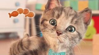 Fun Little Kitten - My Cute Little Pet | Kittens Need A Home!