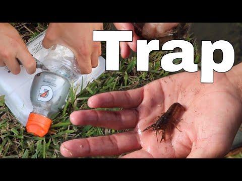 FISH-TRAP Catches RARE CREEPY CRAWFISH!!