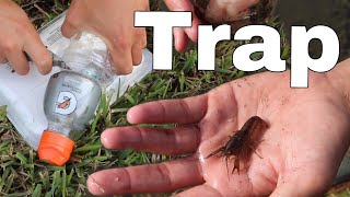 FISH-TRAP Catches RARE CREEPY CRAWFISH!!