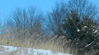 WHY WORRY - EMMYLOU HARRIS / MARK KNOPFLER