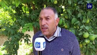 المزارعون يطالبون بصيانة الطريق المؤدي إلى مزارعهم في منطقة قرقور