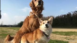 尼崎の公園で、いろはちゃんとペアダンスの自主練した後、いっぱい遊ん...