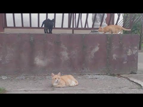 Hyper Kittens