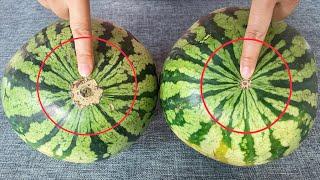 西瓜甜不甜瞧一眼這裡就知道保證一挑一個准老瓜農的方法真管用