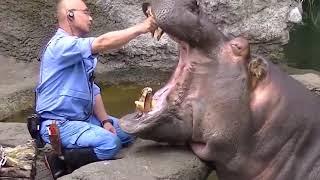 These animals are not afraid of anyone/Amazon rainforest Tribe/Jungle ke Aadivasi/Amazon Forest