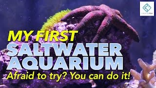My First Saltwater Aquarium - Afraid To Try? You Can Do It!