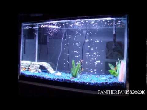 Amazing 29 Gallon Fish Tank