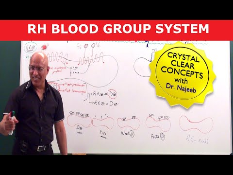 Mastering Rh Blood Group System
