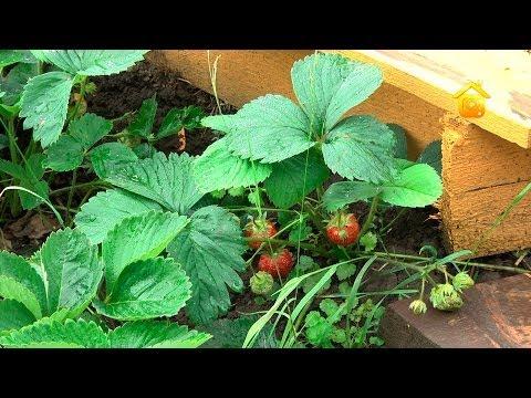 видео: Три огорода на одной сотке. Своими руками // forumhouse