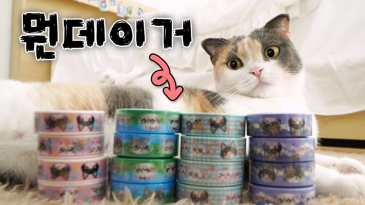 고양이 + 마스킹테이프 = ???   고양이산책