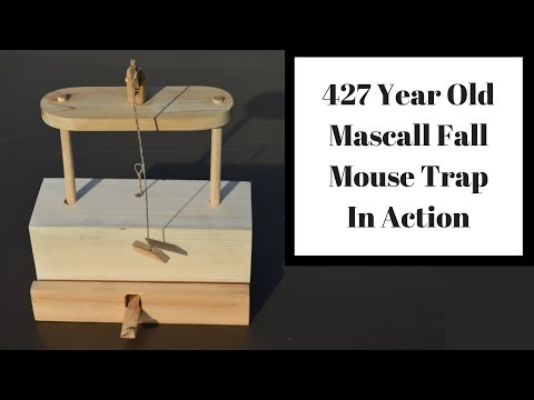 427 Year Old Mascall Style Fall Mouse Trap In Action.