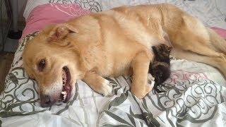 Köpek, Kediyi Böyle <b>Emzirdi</b>