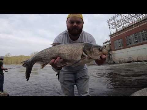 Giant ASIAN CARP - One After Another!!!! (Indiana RIVER)