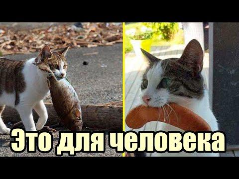 Вопрос: Что делать если кошка киданула свое потомство?