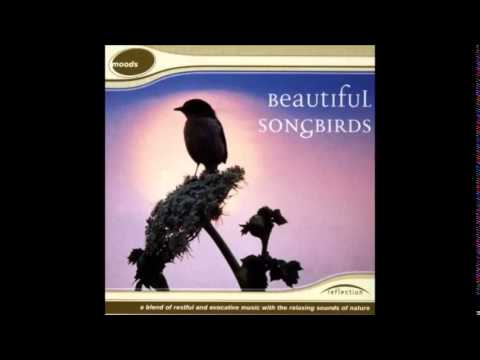 Beautiful Songbirds, Nature Sounds