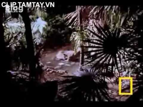 Xoay cùng cuộc sống video tập tính động vật  Báo