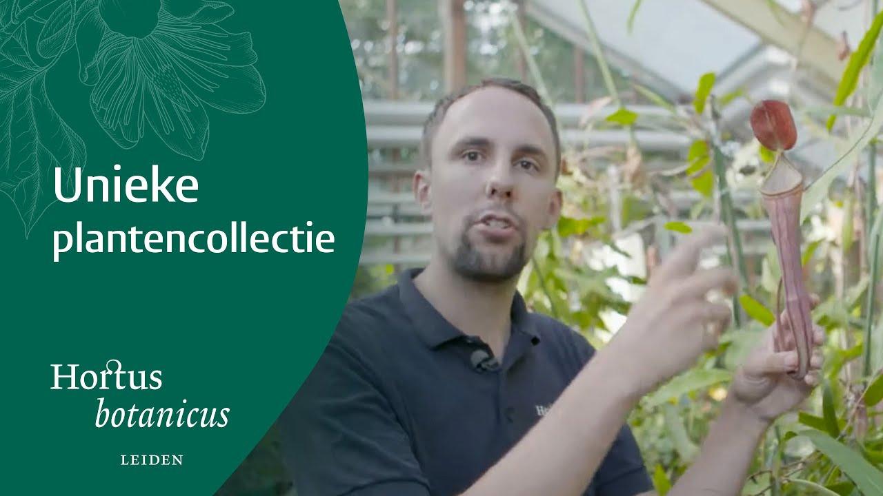 Botanische Tuin Leiden : Nepenthes at hortus botanicus leiden english subtitles youtube