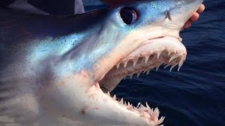 BIG MAKO SHARKS TURN UP IN OUR CHUM